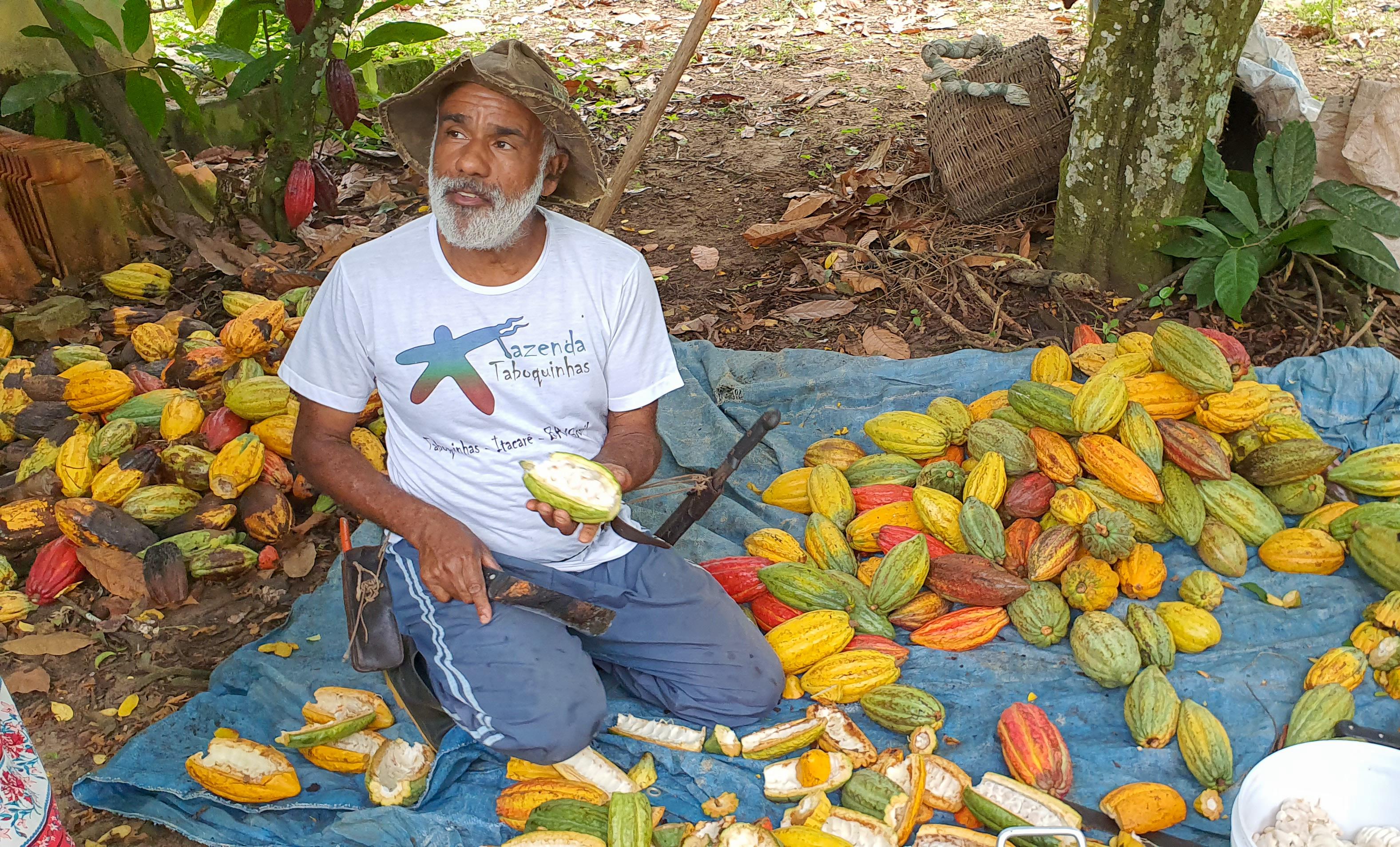 Osvaldo on his organic cacao farm Taboquinhas in Bahia Brazil surrounded by the Atlantic Rainforest
