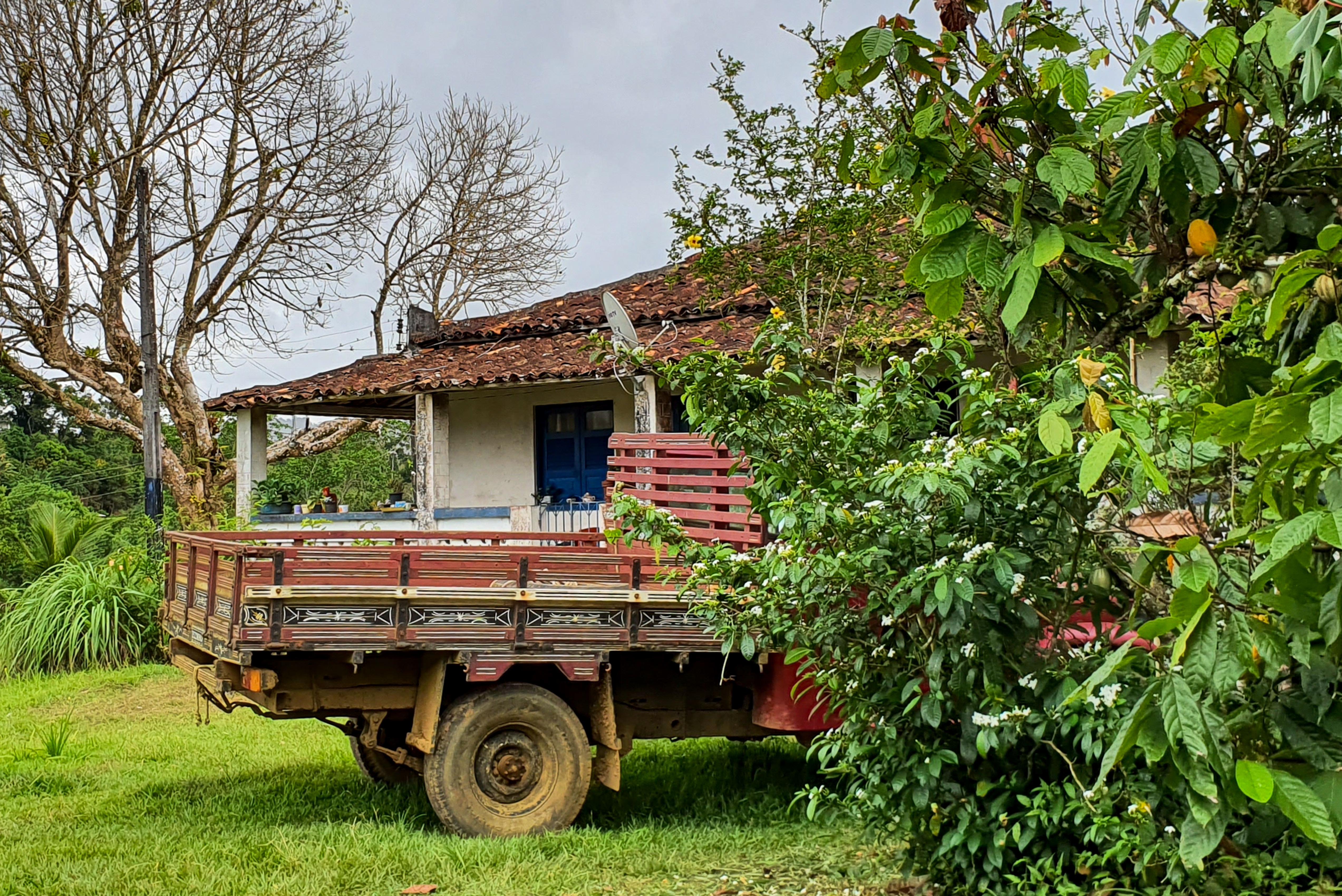 Organic cacao farm Taboquinhas in Bahia Brazil surrounded by the Atlantic Rainforest