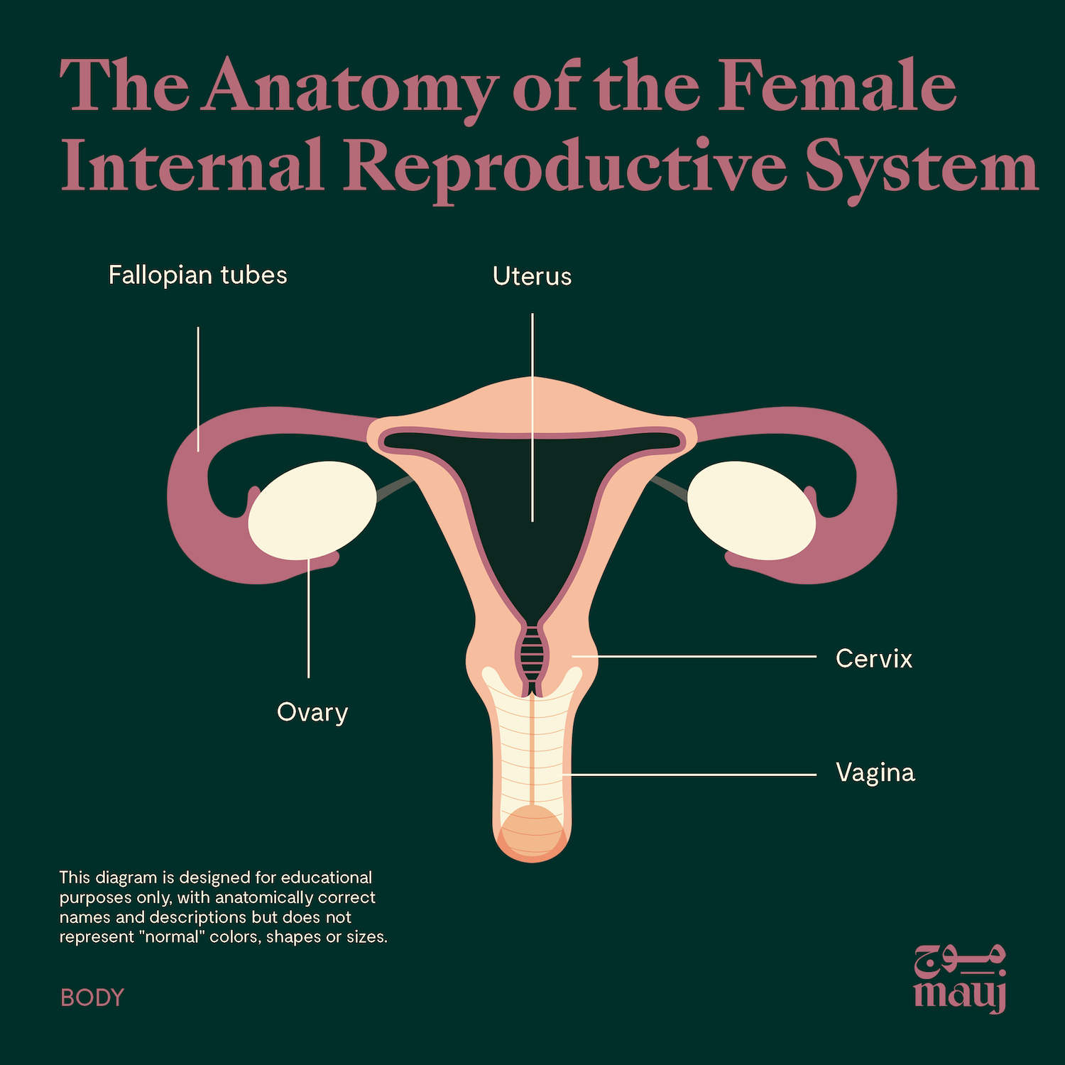 The anatomy of the female internal reproductive system.