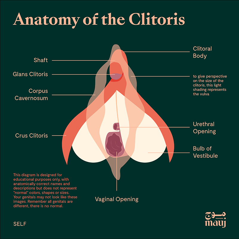 Anatomy of the Clitoris