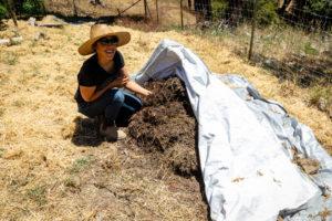 Regenerative farming techniques on cannabis farms, pictured