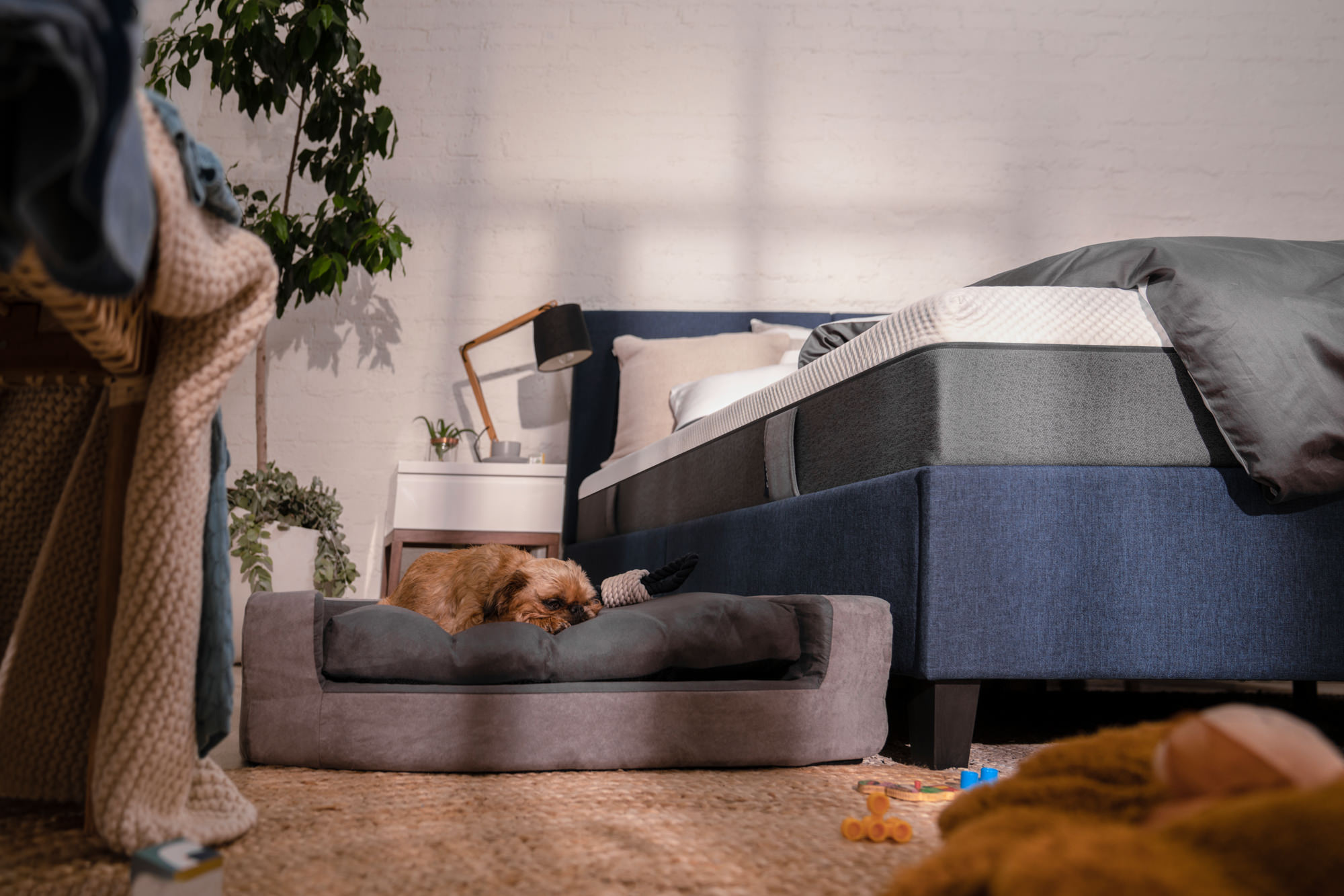 Image of a dog sleeping in its Emma Dog Bed for the Emma Matratze Content Library.