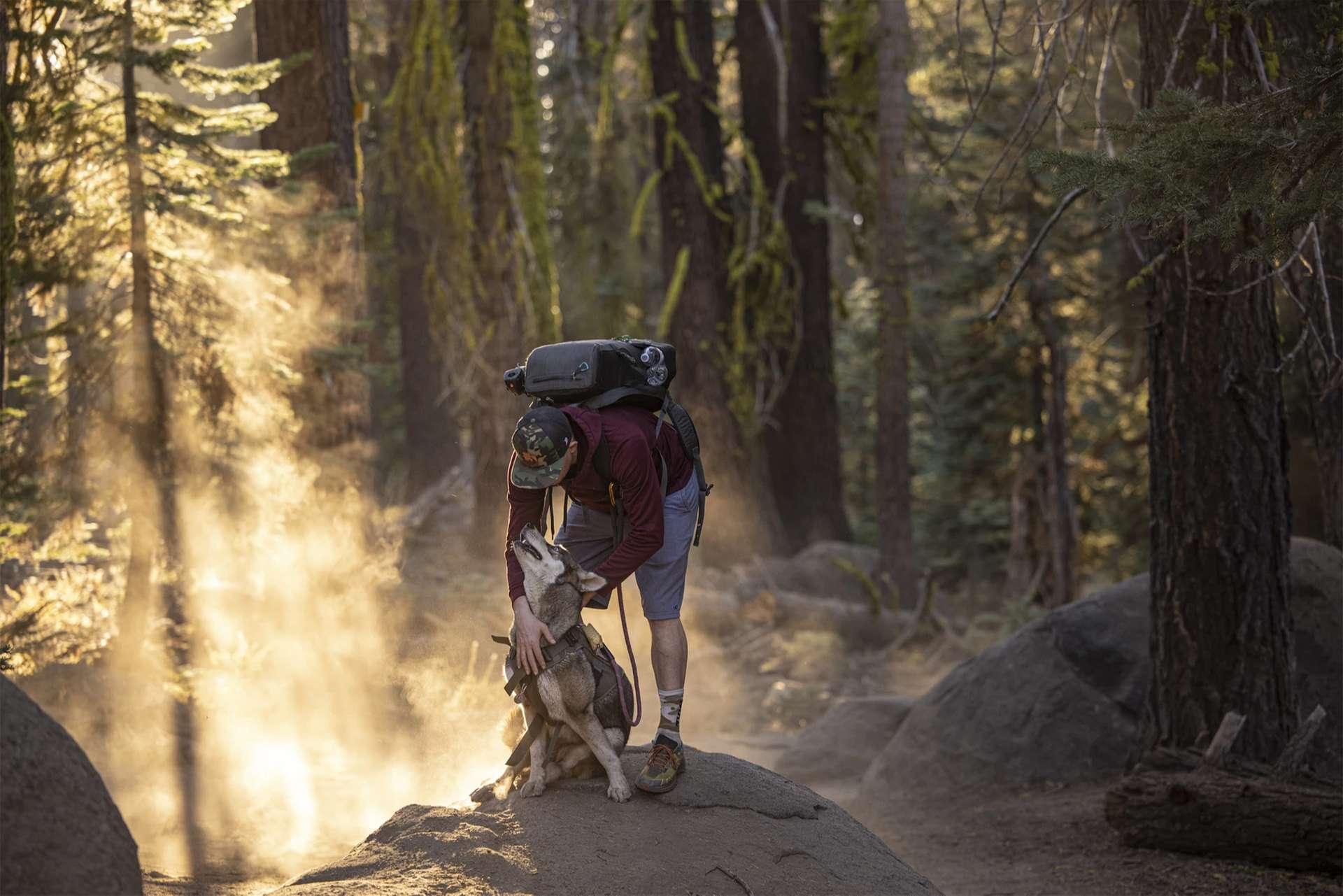 Bild eines Mannes und eines Hundes im Wald.