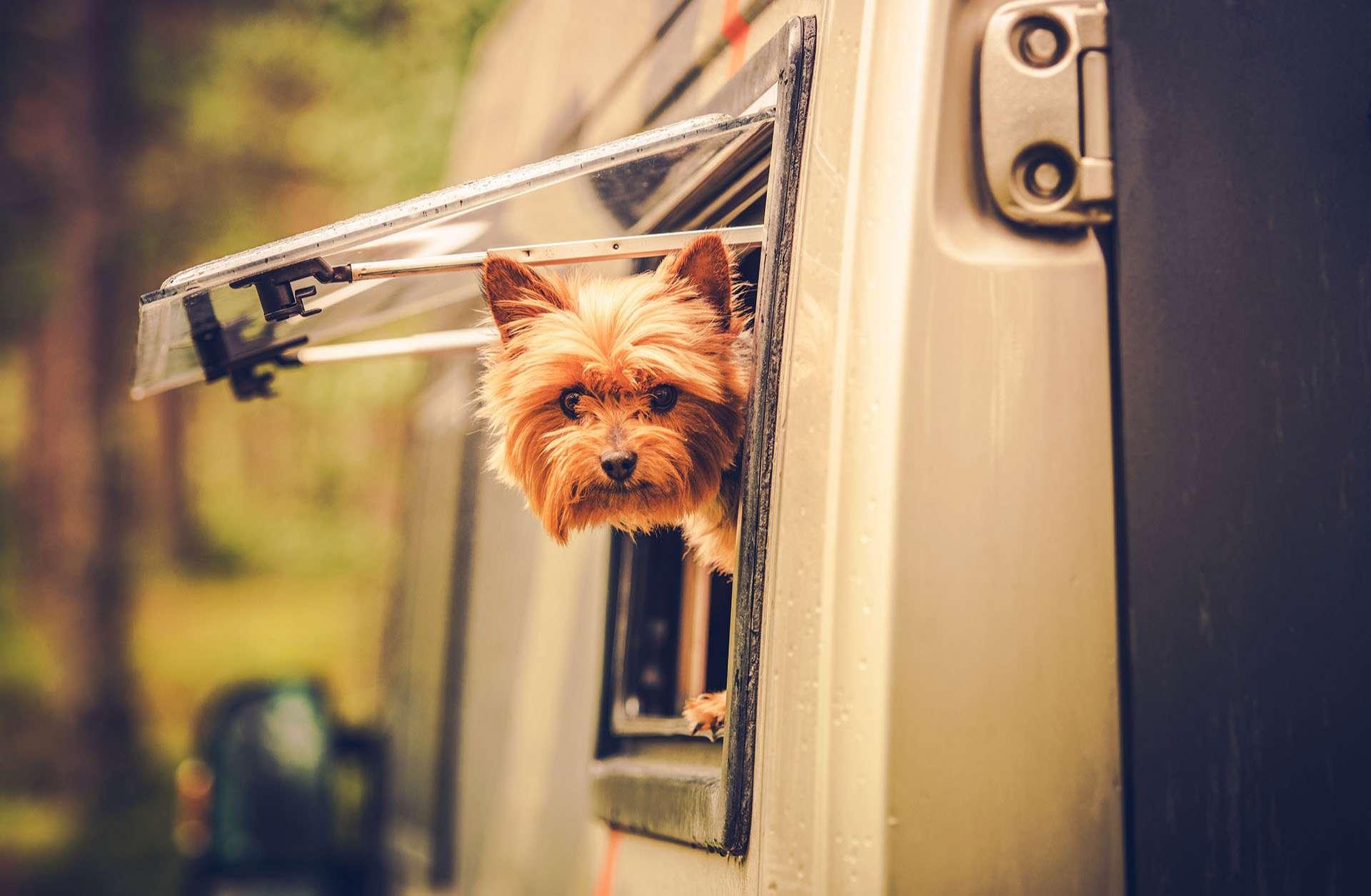 Ein Bild von einem Hund der aus dem Fenster eines Wohnmobil schaut.