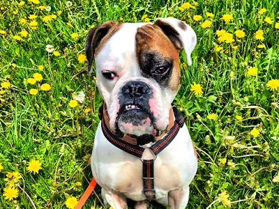 Tierheilpraktiker Aying. Tierheilpraktikerin Mobile Praxis  Ich konzentriere mich darauf, Ihrem Tier die bestmögliche ganzheitliche Behandlung zu bieten, in dem ich eine Reihe von Dienstleistungen anbiete, darunter Akupunktur, Phytotherapie, Blutegeltherapie, Mykotherapie, Homöopathie und Manuelle Therapien für Pferde, Hunde und Katzen.  ©Tierheilpraktikerin Lilan Köster