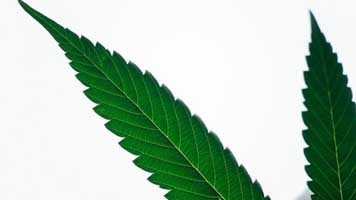 Cannabis Training for Owners, Employees