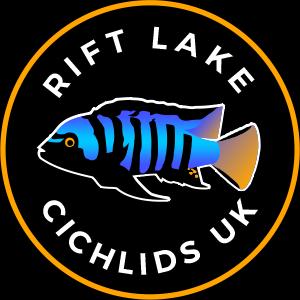 Rift Lake Cichlids