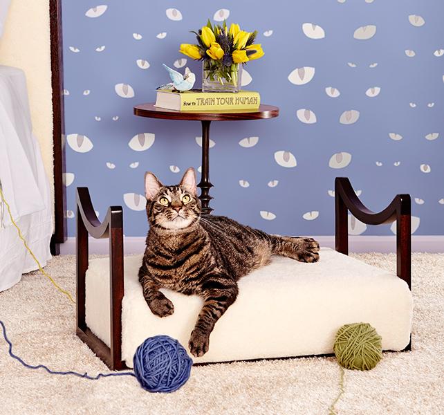 Rachael's Rescue Cat in Bed
