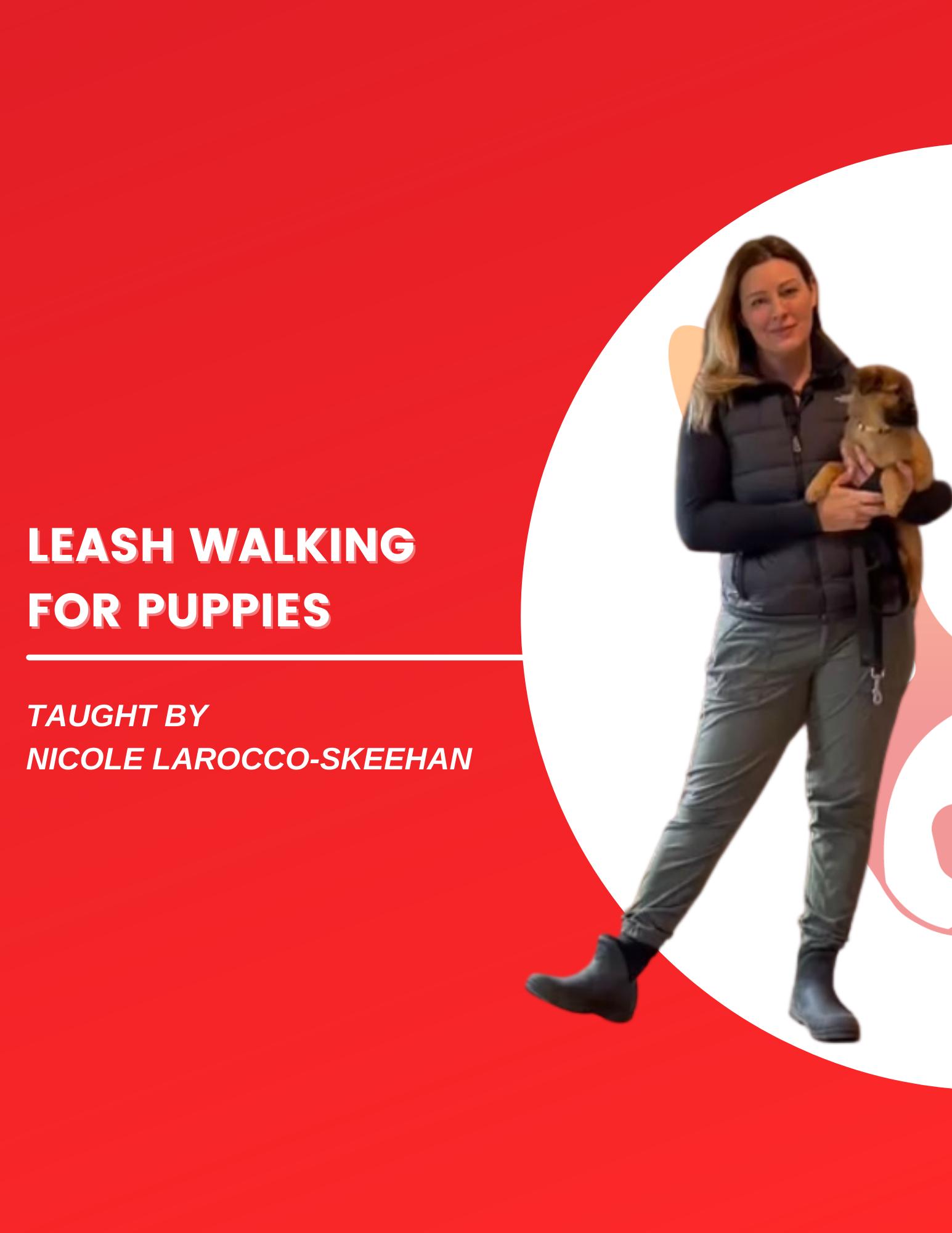 puppy leash walking video tutorial