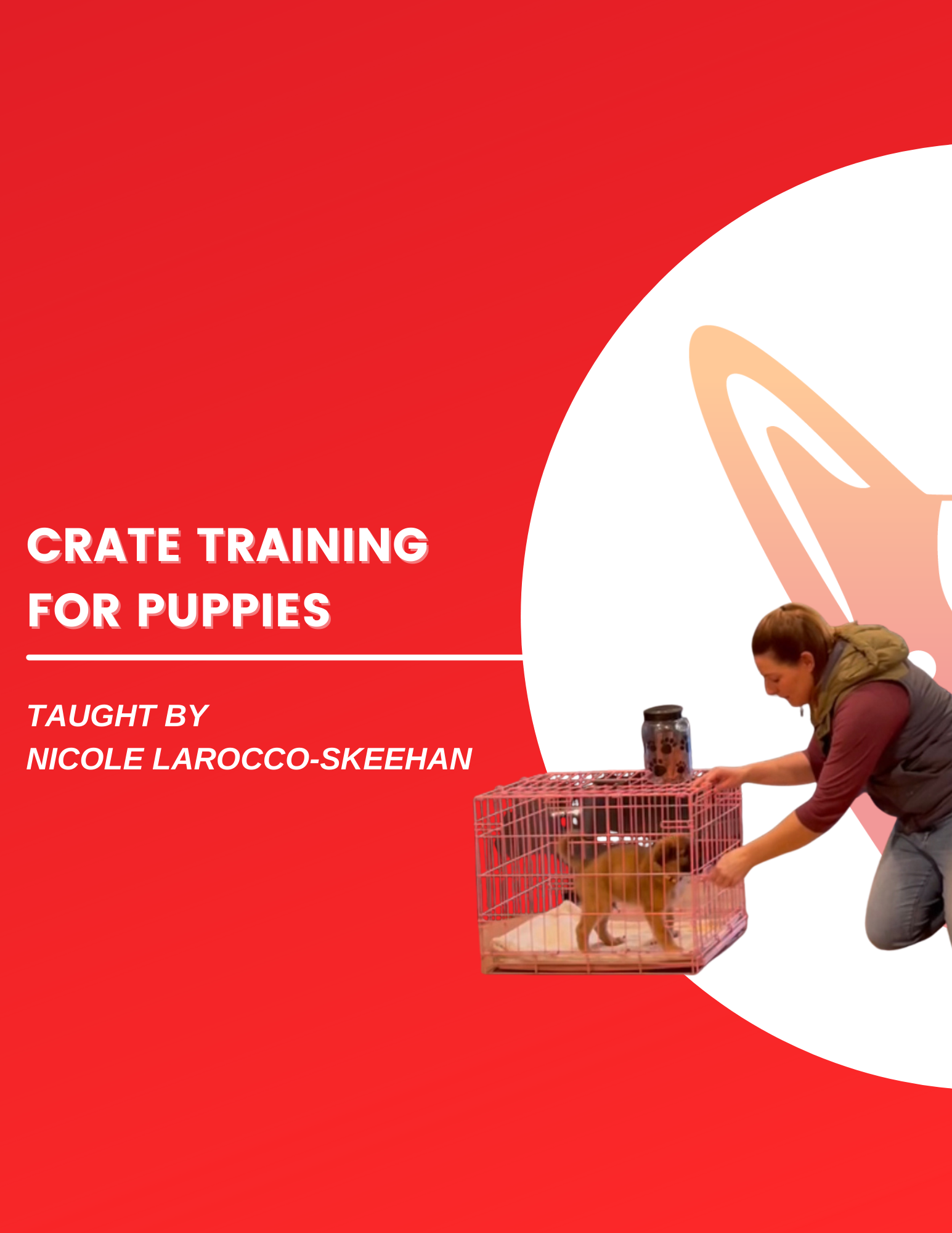 crate dog training videos
