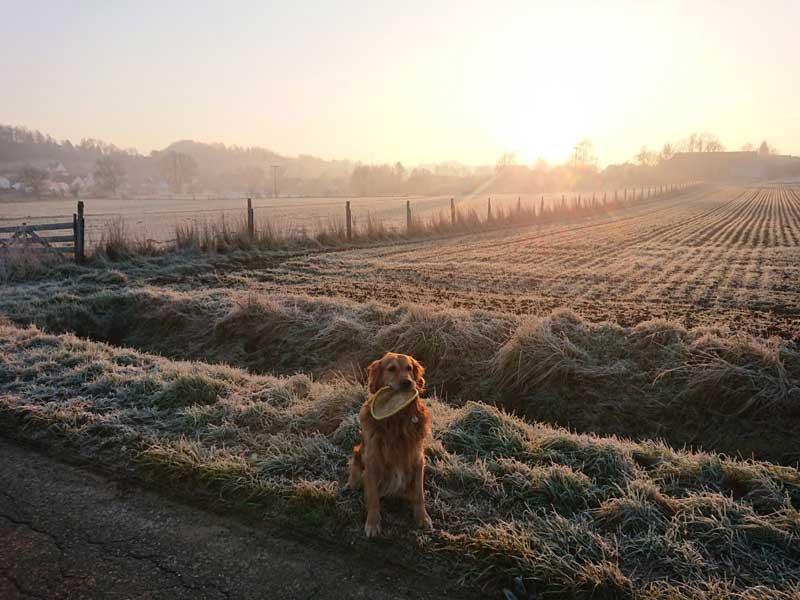 Hund sitzt vor einer Wiese bei Sonnenuntergang