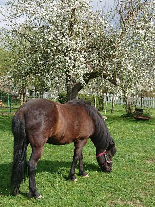 Pferd steht auf einer grünen Wiese