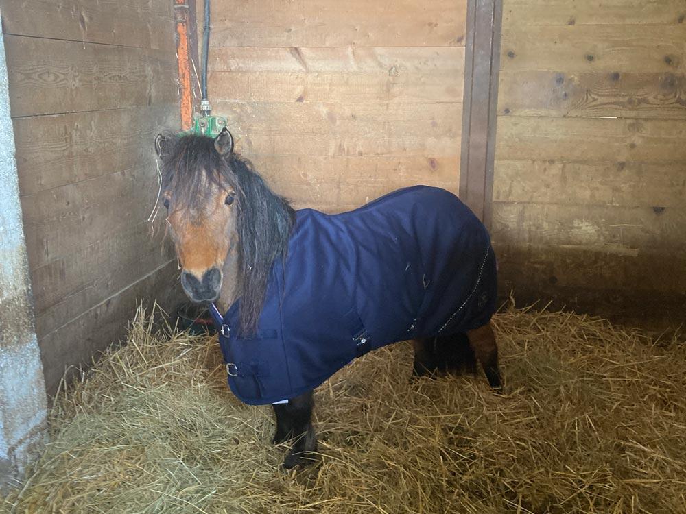 Un poney au écurie des sudriers