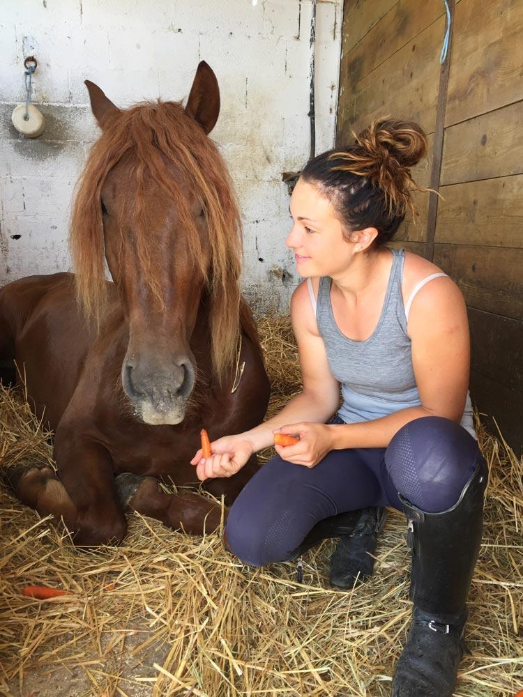 Un cheval en soins au écurie des sudriers au nord de Toulouse