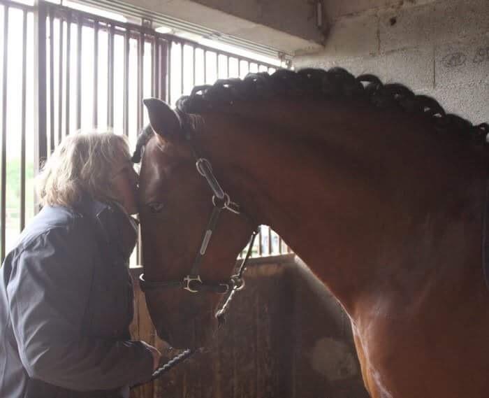 Un cheval en pension au nord de Toulouse