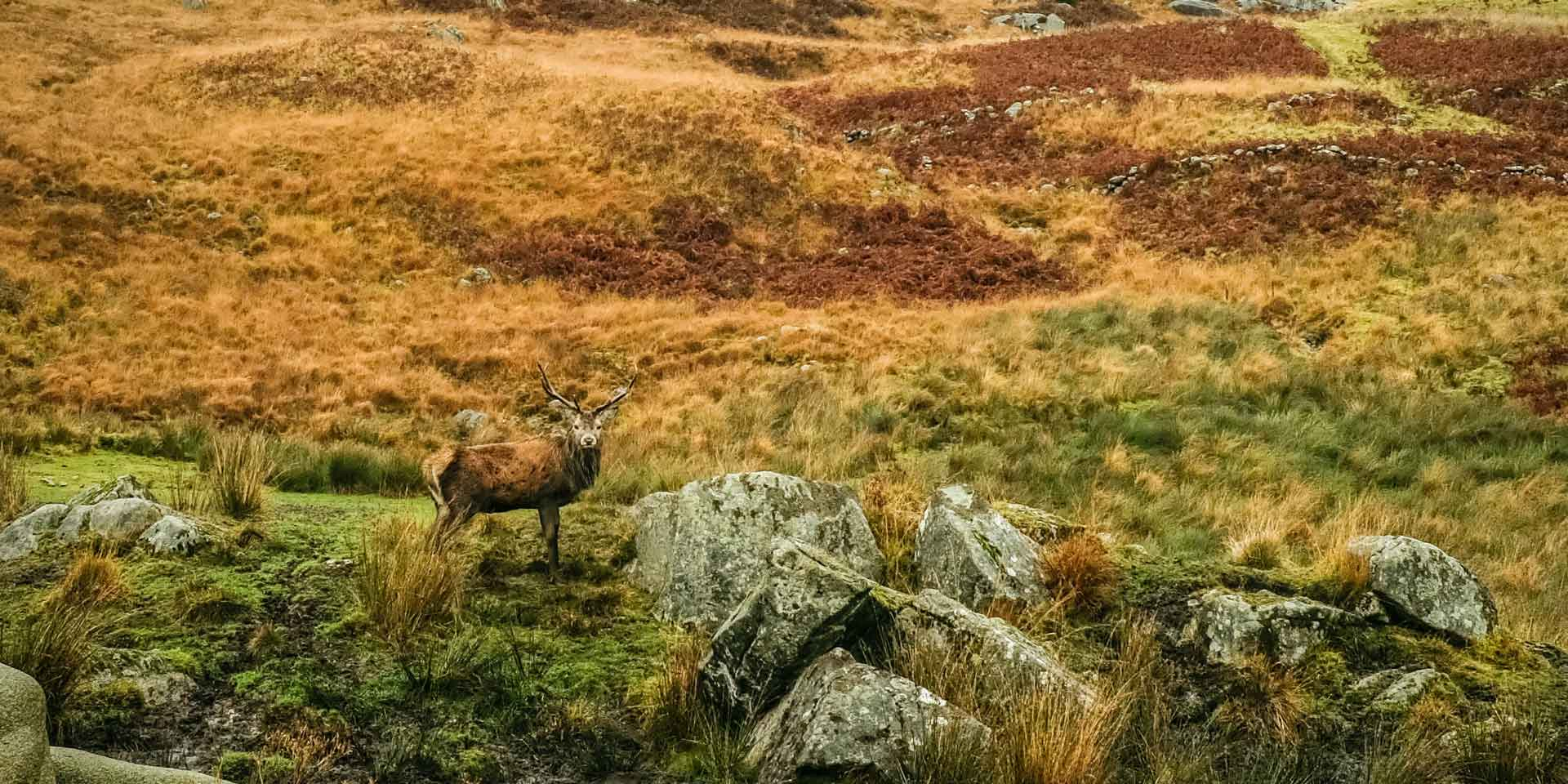 Pennyghael Estate on Mull offers traditional highland field sports