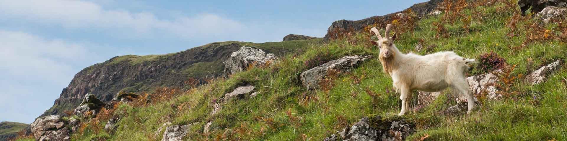 Pennyghael Estate on the Isle of Mull, Scotland