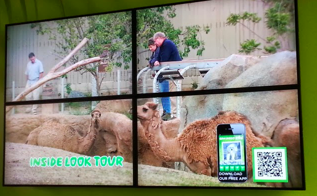 QR codes on camel tour at the san diego zoo