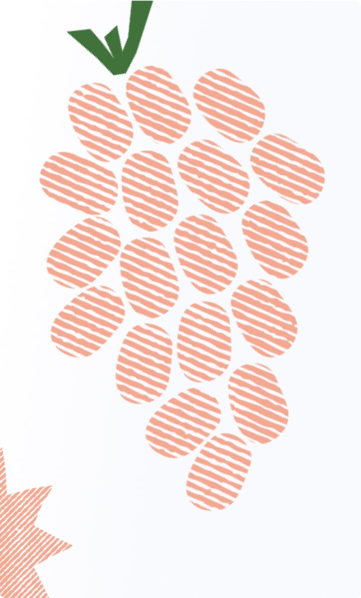 Illustrations for Perfekto 2