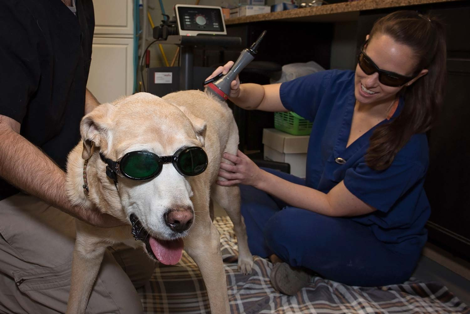 Smiling dog receiving laser therapy