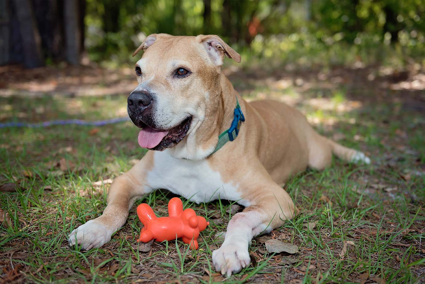 Smiling dog laying in grass with toy