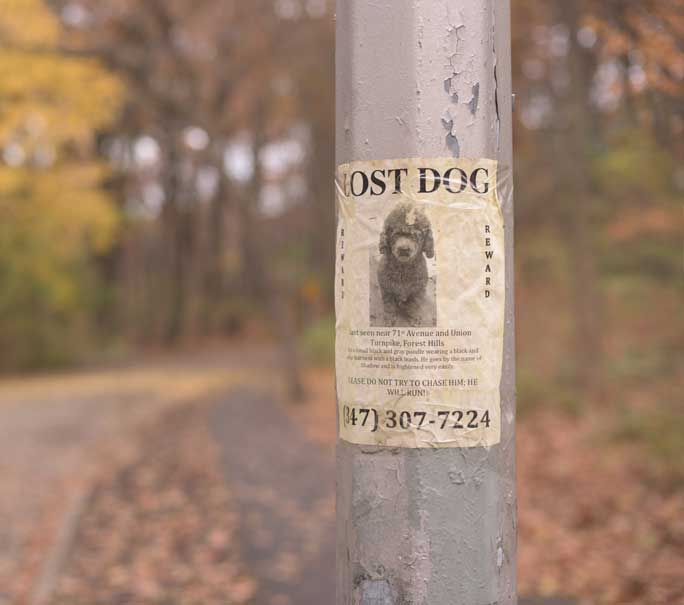 Photo of lost dog poster on lamp pole