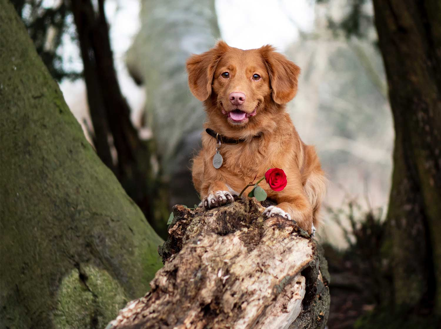 10 reasons your dog makes the best Valentine's Day date