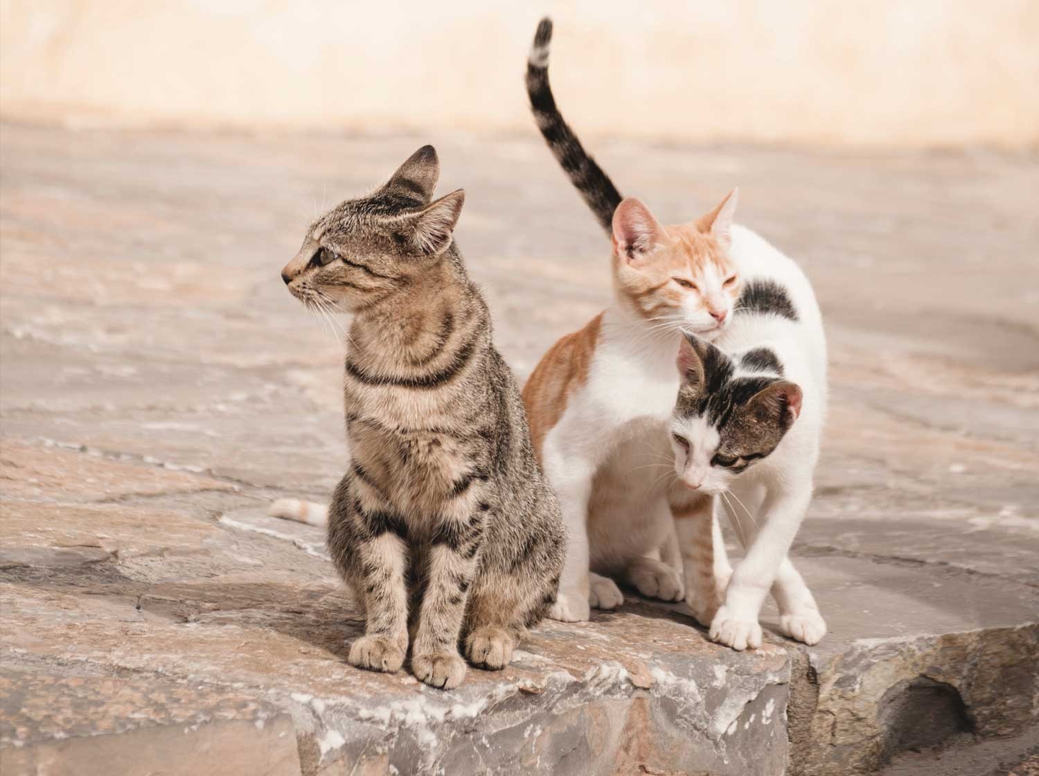 Celebrate, recognize and spread awareness of the importance of spaying and neutering your pet.