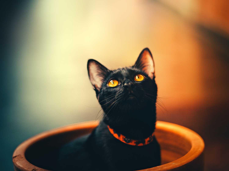 Black cat in a flower pot