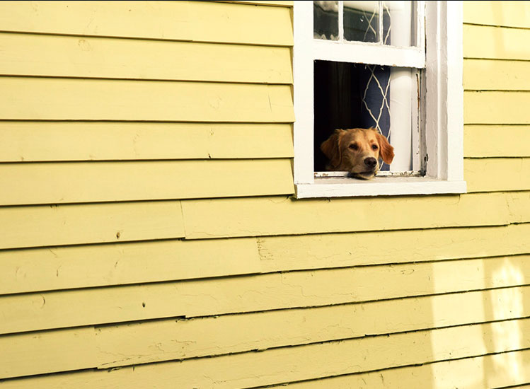 Prepare now for hurricane season. Do not leave pets behind.