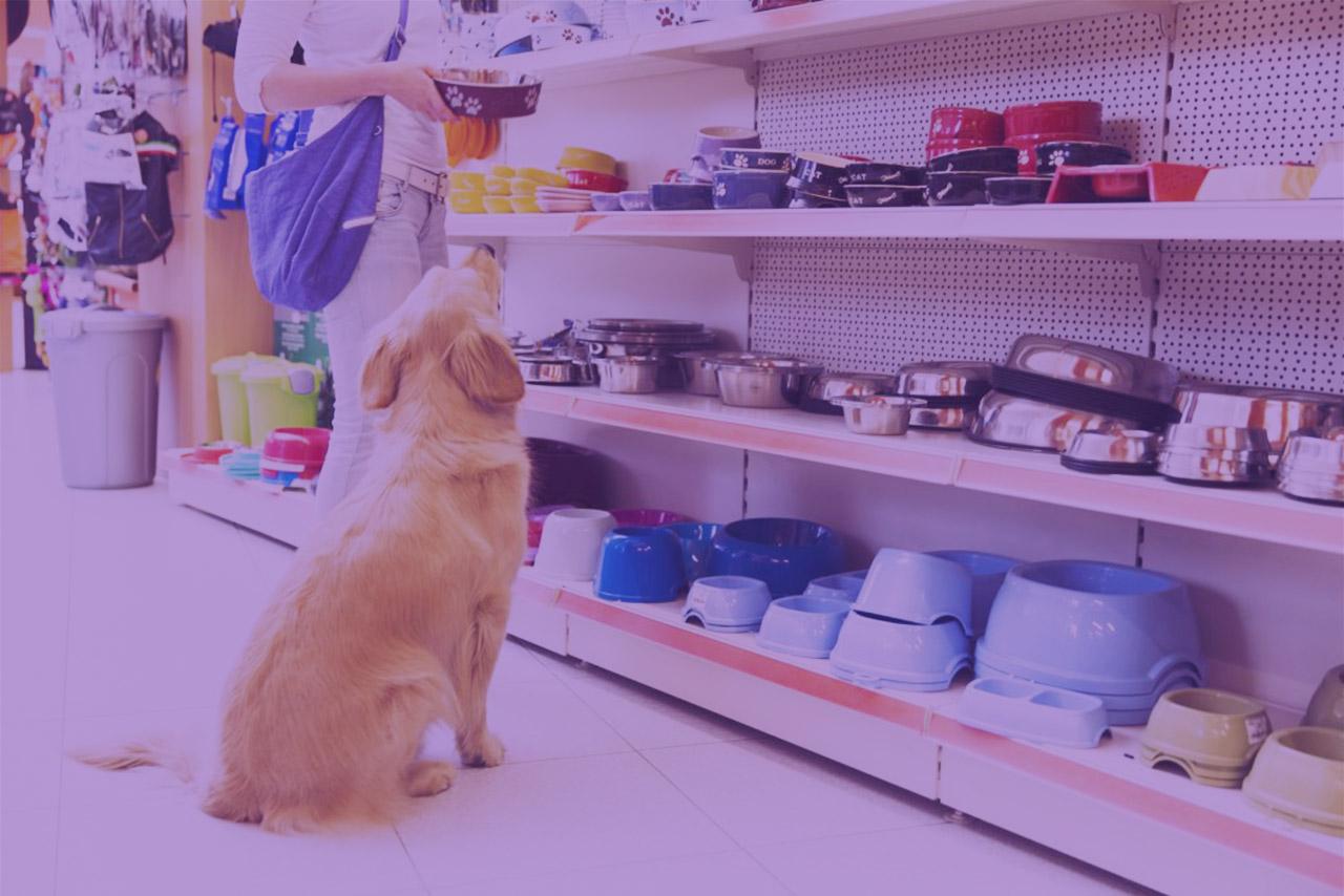3 dicas rápidas para você implementar agora no seu pet shop