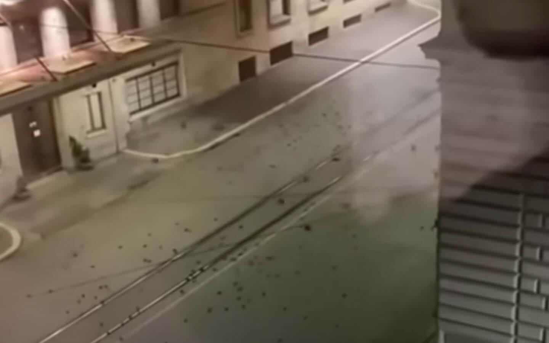 VIDEO Străzile Romei, pline de păsări moarte după focurile de artificii. Dezastru și la o grădină zoologică din Germania