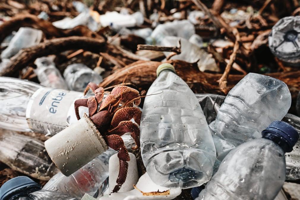 crab care rascoleste in deseuri de plastic poluarea oceanelor