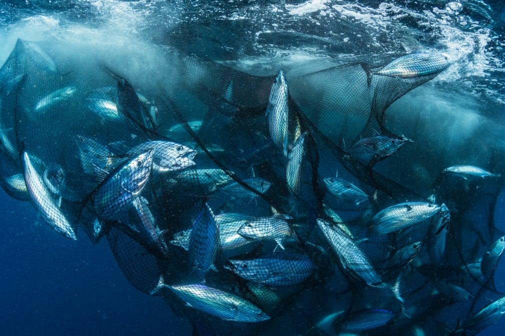 plasa plina cu ton poluarea oceanelor