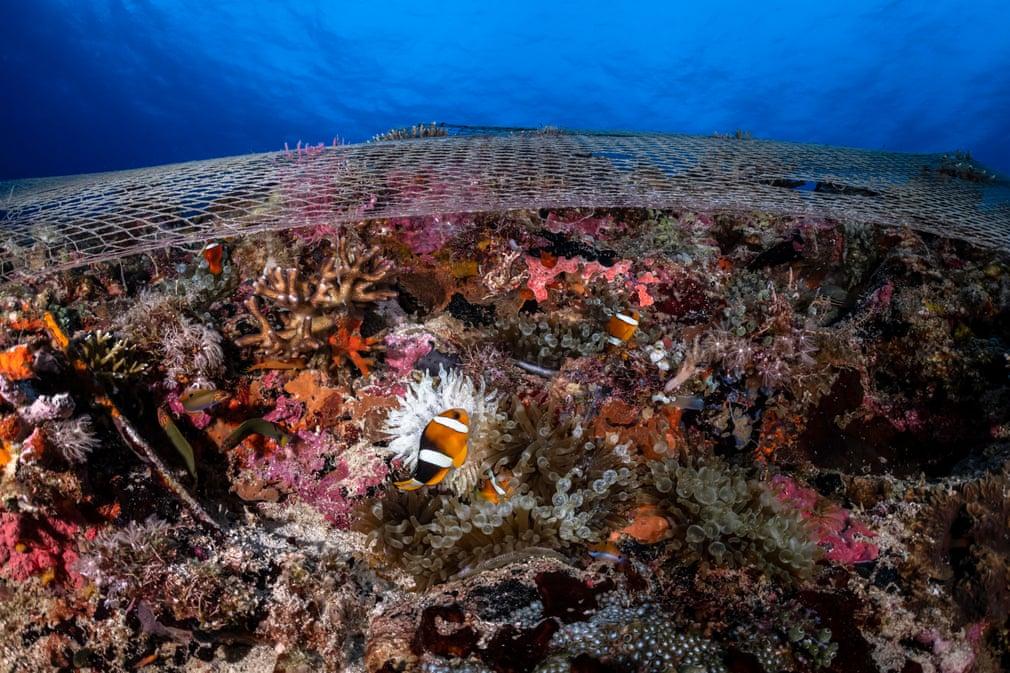 peste plasa de pescuit poluarea oceanelor