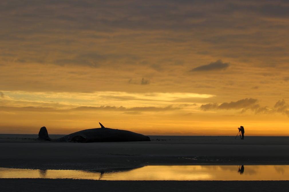 balena esuata din cauza poluarii oceanelor