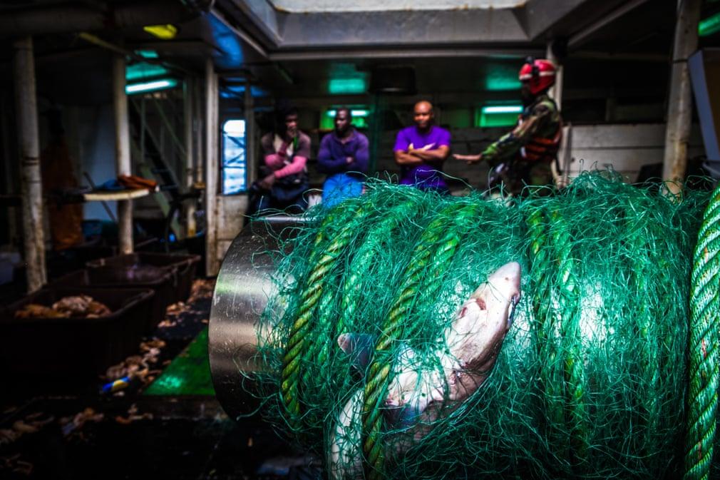 pui de rechin mort poluarea oceanelor