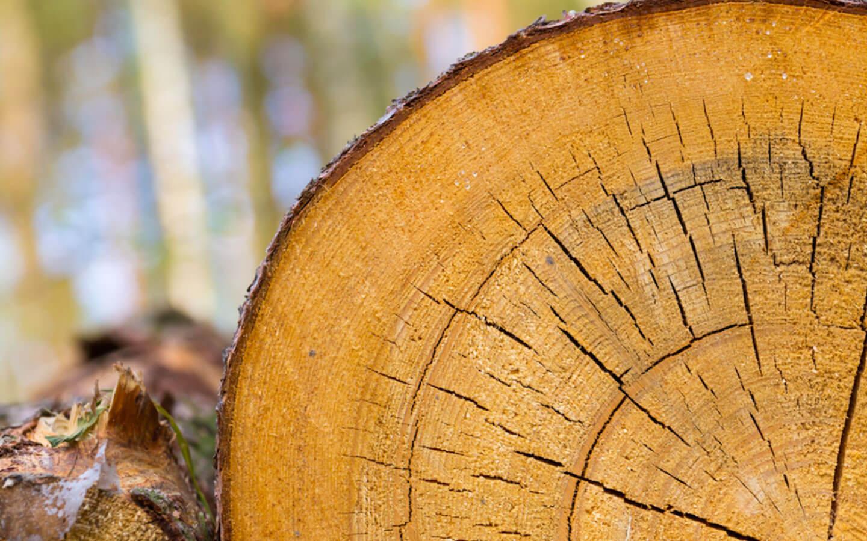 SUMAL 2.0 | Cum vrea statul român să lupte cu tăierile ilegale de pădure din 1 noiembrie. Cine îi va învăța pe pădurari să folosească aplicația?