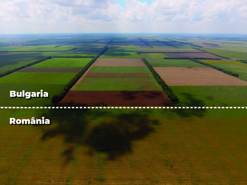comparatie defrisari Bulgaria Romania