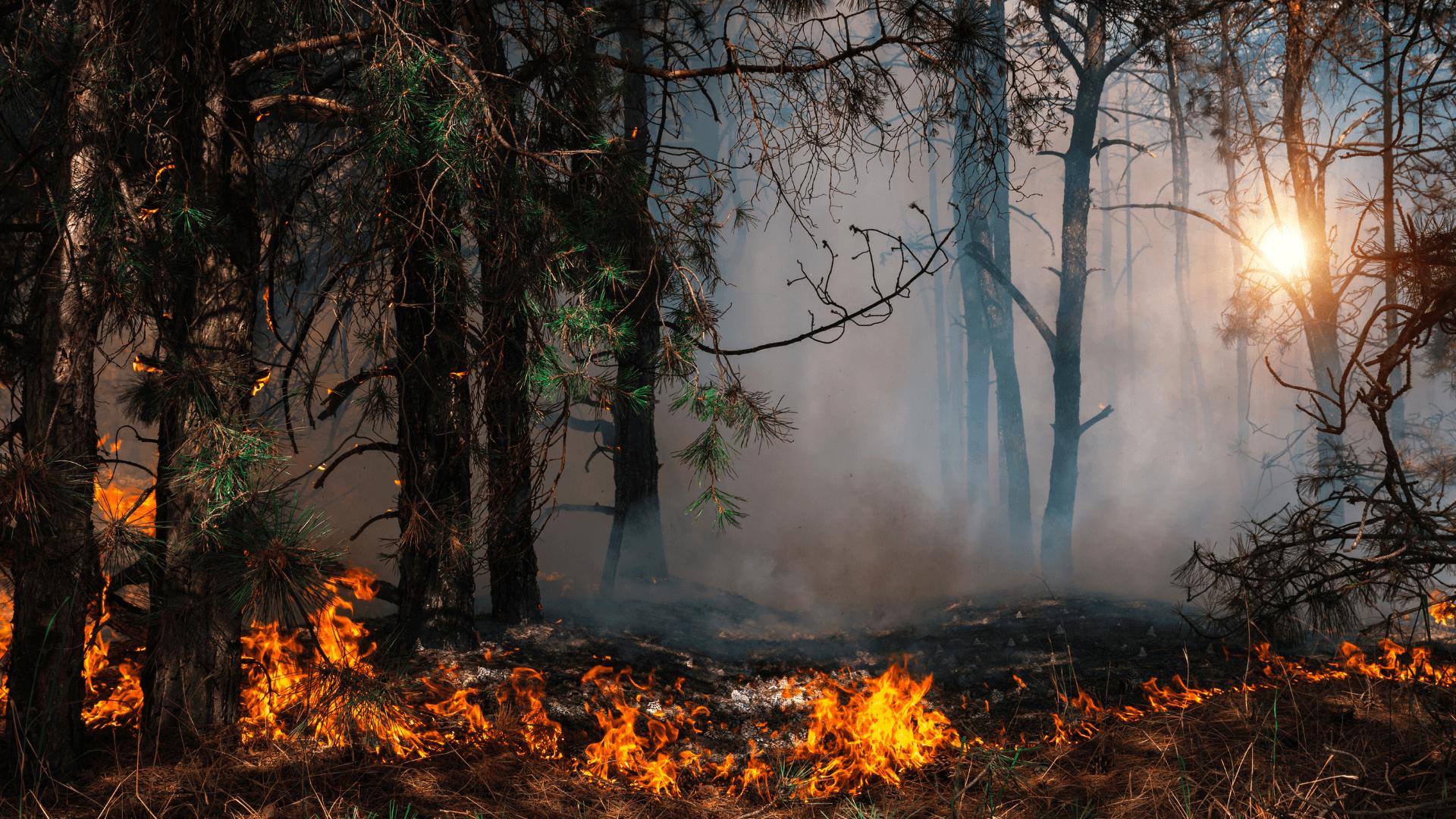 STUDIU. Particulele poluante provenite de la incendii sunt mai periculoase decât noxele de la mașini