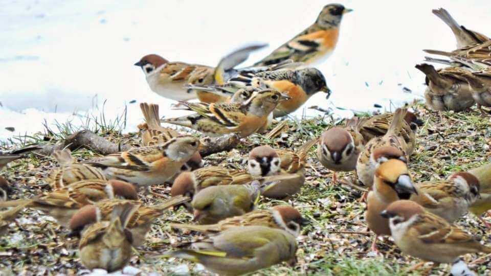 pasari afectate de poluarea fonica