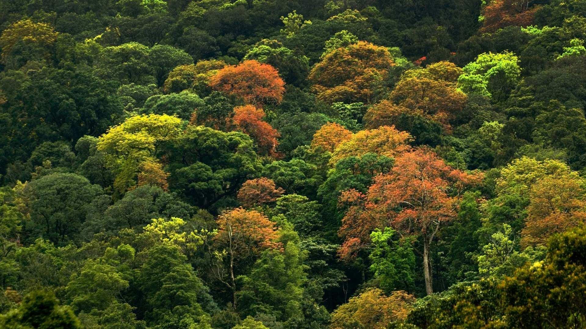 Ca să nu ajungem în pom, să avem grijă de pădure. 25 martie, Ziua Națională a Pădurilor