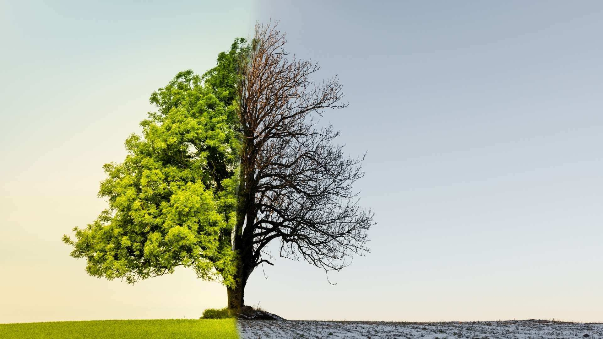 Care sunt efectele schimbărilor climatice asupra sănătății