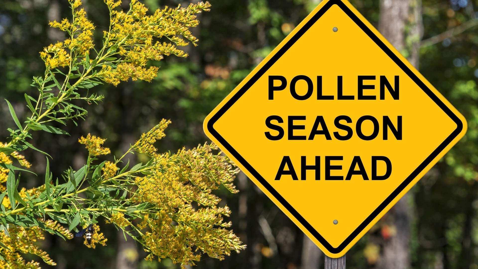Alergiile la polen apar mai devreme din cauza schimbărilor climatice