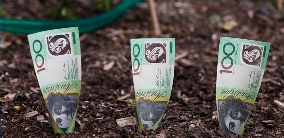 Australian hundred dollar bills planted in dirt.