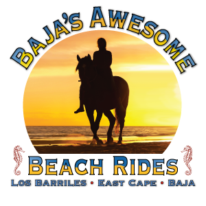 Baja's Awesome Beach Rides logo