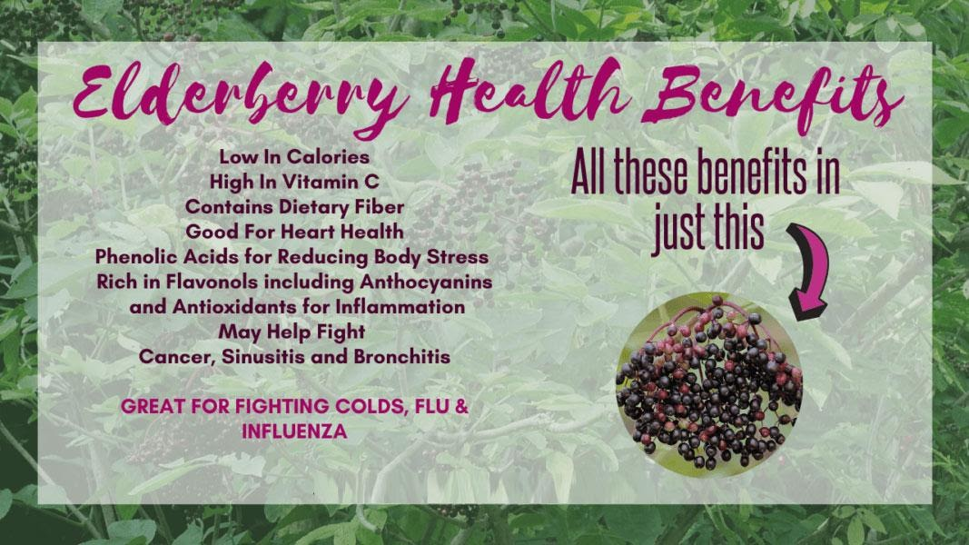 Elderberry Health Benefits