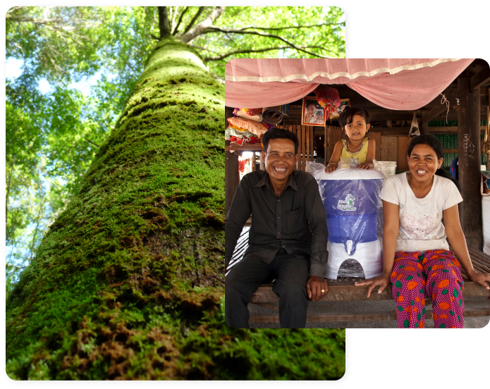 Combination of two pictures, family with water filter and big tree in the rainforest
