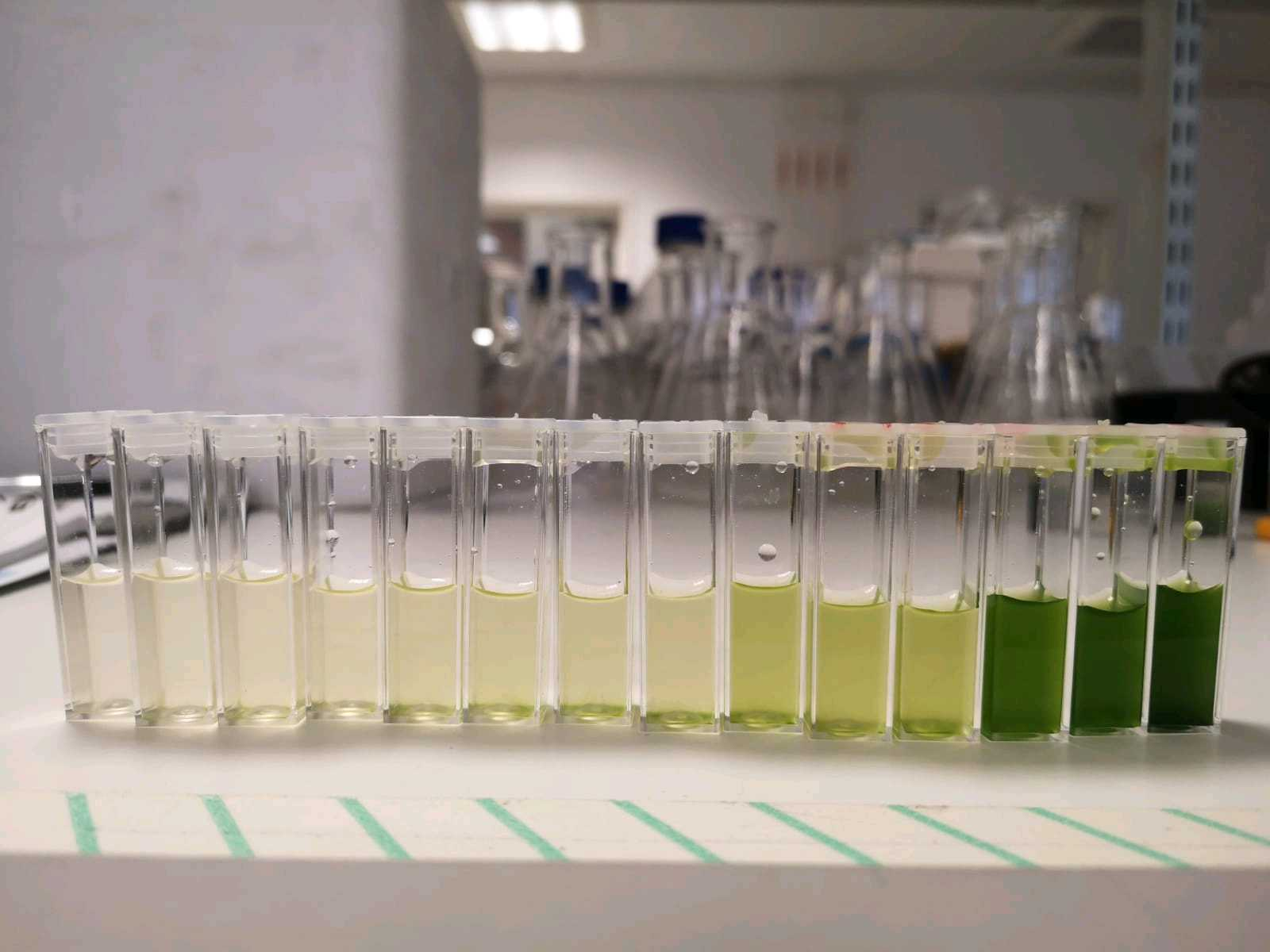 concentrated algae arranged in a neat row of vials containing gradually increased concentrations