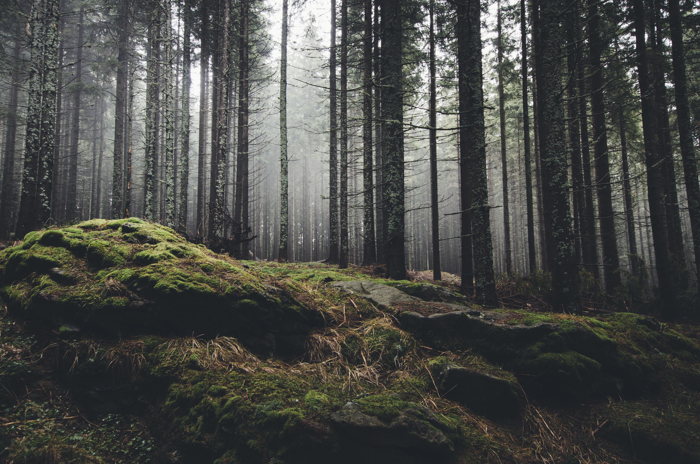 Woodgreen forest